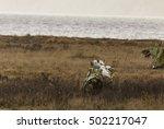 Wildlife In Boundary Bay Serie...