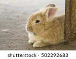 Image Of A Brown Rabbit On The...