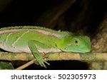 green anole | Shutterstock . vector #502305973