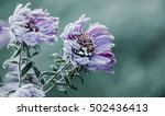 autumn. frosty morning. it...   Shutterstock . vector #502436413