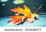 Autumn Leaves In Autumn Colors...
