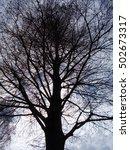 a silhouette of tree  japan | Shutterstock . vector #502673317