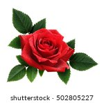 Red Rose Flower And Leaves...