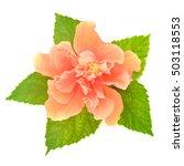 Orange Hibiscus Flower And...