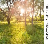 green sunny park. landscape... | Shutterstock . vector #503143483