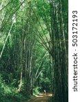 asian girl exploring bamboo... | Shutterstock . vector #503172193
