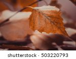abstract autumn background with ... | Shutterstock . vector #503220793