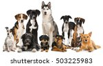 Stock photo group of different dogs 503225983