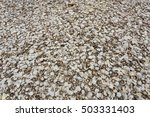 pile of oysters shells | Shutterstock . vector #503331403