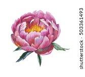 wildflower peony flower in a... | Shutterstock . vector #503361493
