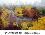 maple subdued in the fall of... | Shutterstock . vector #503385613