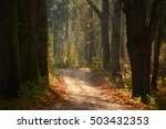 dirt road in autumn forest | Shutterstock . vector #503432353