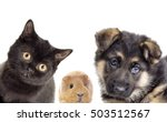 puppy and kitten and guinea pig  | Shutterstock . vector #503512567