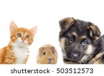 puppy and kitten and guinea pig  | Shutterstock . vector #503512573