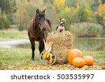 Autumn Portrait Of A Nice Pony...