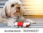 injured shih tzu front leg... | Shutterstock . vector #503540257