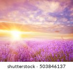 sunset over a summer lavender... | Shutterstock . vector #503846137