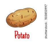 potato vegetable icon. isolated ... | Shutterstock .eps vector #503853997