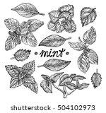mint set. vector hand drawn... | Shutterstock .eps vector #504102973