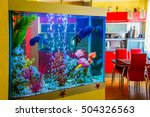 beautiful aquarium with... | Shutterstock . vector #504326563