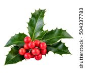 Holly Berries And Leaves On...