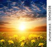 sunset and flower field.   Shutterstock . vector #50456338