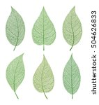leaf vector  isolated and and... | Shutterstock .eps vector #504626833