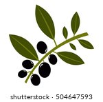 olives on white background | Shutterstock .eps vector #504647593