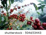 The Coffee Plantation In The...