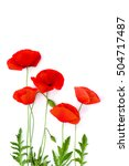 Red Poppies  Common Poppy  Cor...