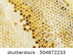 bee larvae the images show... | Shutterstock . vector #504872233