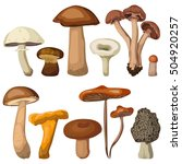 mushrooms forest edible... | Shutterstock .eps vector #504920257