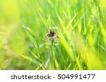 Small photo of Butterflies flit in the grass