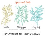 vanilla  spice with flowers and ... | Shutterstock .eps vector #504992623