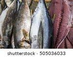dead ocean fish fillets at...   Shutterstock . vector #505036033