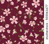 gypsophila baby's breath pink... | Shutterstock .eps vector #505061677