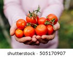 farmers hands with freshly... | Shutterstock . vector #505170907