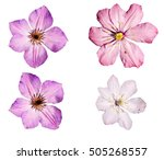 Set Of Four Clematis Flowers  ...