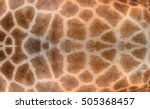 Texture Of Giraffe For...