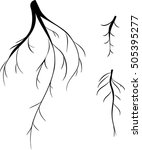 silhouettes of roots  | Shutterstock .eps vector #505395277