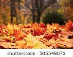 Golden Yellow Autumn Leaves...
