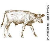 vector antique engraving...   Shutterstock .eps vector #505559407