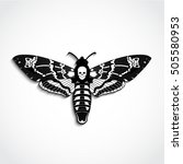 deaths head moth vector... | Shutterstock .eps vector #505580953