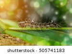 macro itchy worms | Shutterstock . vector #505741183
