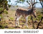 blur in south africa   mlilwane ... | Shutterstock . vector #505810147