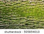 Close Up Of Moss On Tree....