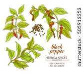 black ground pepper | Shutterstock .eps vector #505913353