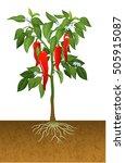 Illustration Of Chili Pepper...