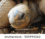 Small photo of Big Aldabra tortoise eye detail in Mauritius.