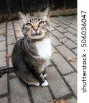 cat portrait   Shutterstock . vector #506036047